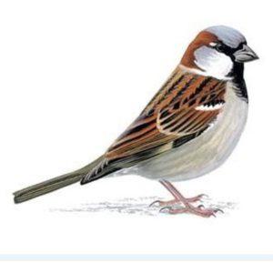 Sparrow Farm